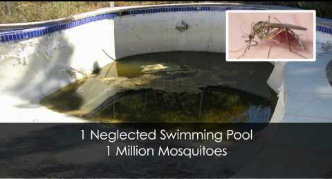 Unused pools potential breeding ground for west nile virus for Can mosquitoes breed in swimming pools