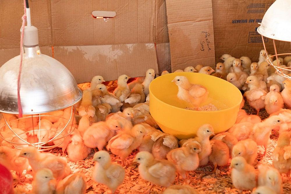 Chicken-inside_unsplash