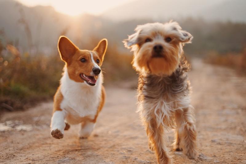dogs_petfood