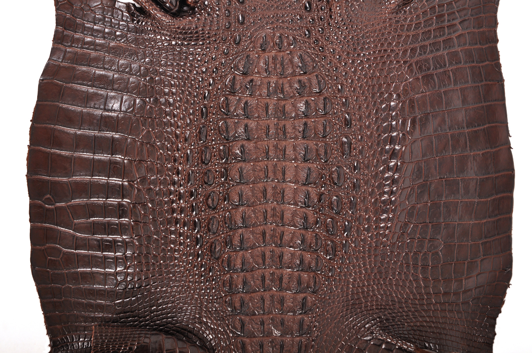 piel de cocodrilo enfermedad