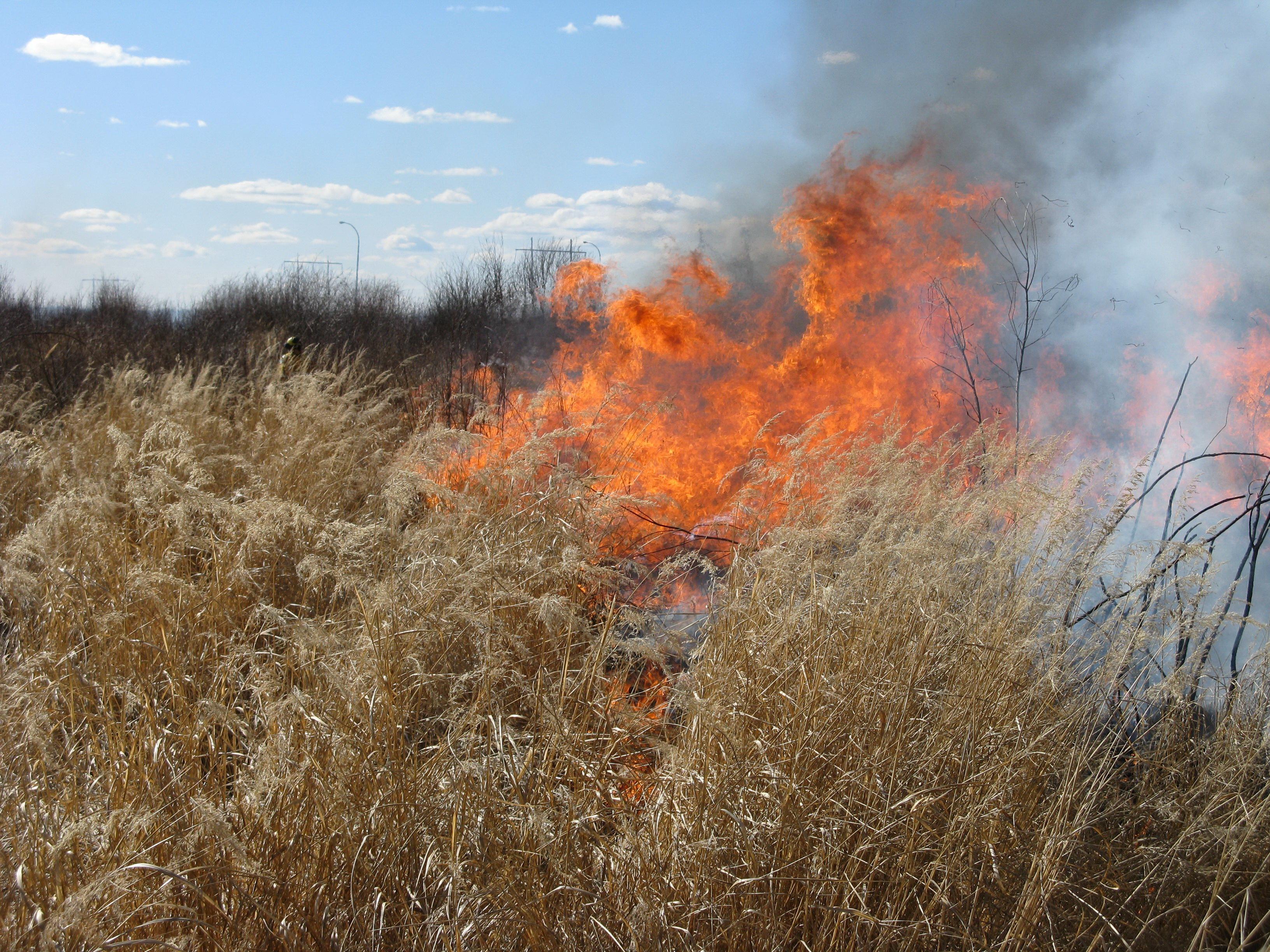 --gwbnasfs01.env.gov.ab.ca-Leah.Lovequist-2011-ads-Grass_burning