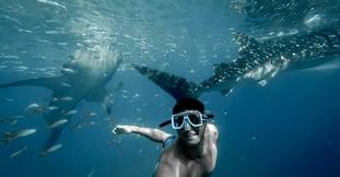 ¿Cómo es nadar con un tiburón ballena? Todo sobre la experiencia