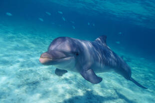 Delphinus' unflagging commitment towards conservation