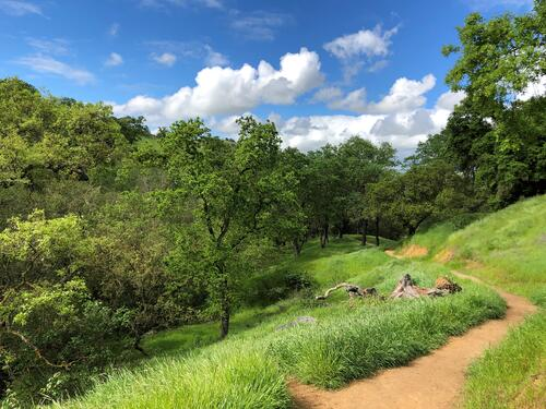 Coyote Valley dirt trail winding through tree covered hillside