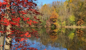 The Pond …. Dressed in Autumn Beauty
