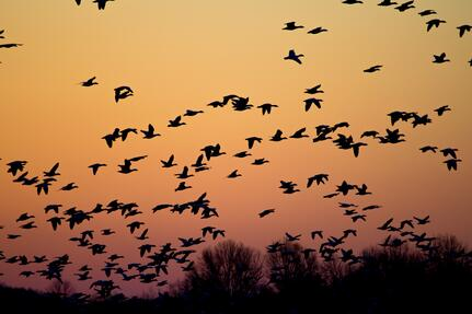 hubspot website migration like birds