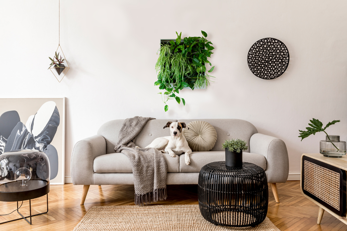 What Living Wall Is Best For You?