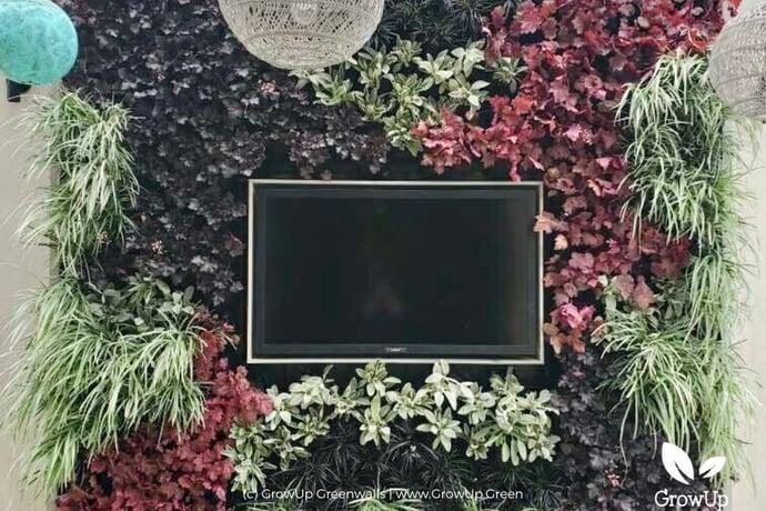 Case Study| Greenwall around a TV