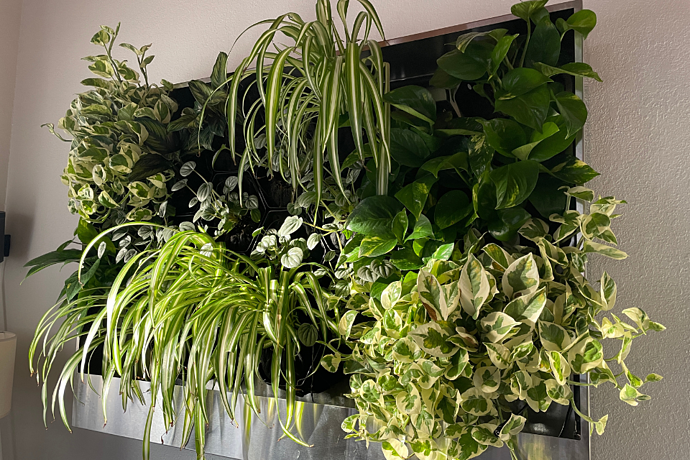 Guest Blog | The 5 Health Benefits of Greening Your Home