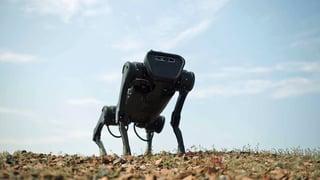 Video: Ontmoet Space, de eerste robotkantoorhond ter wereld