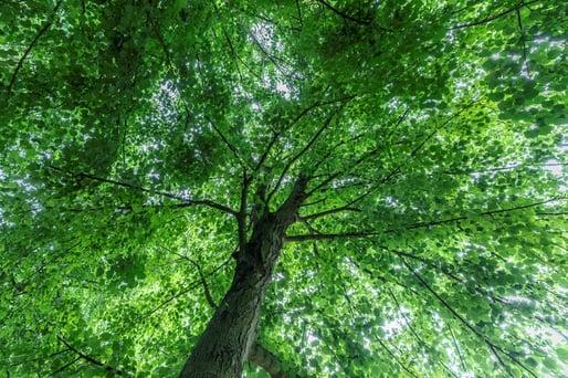 De boom als airco