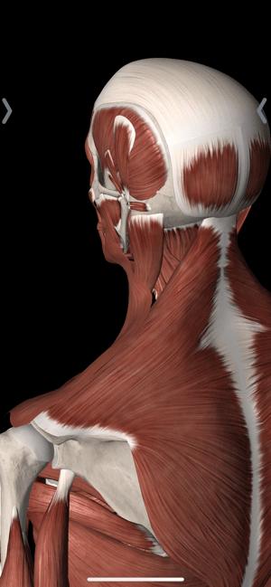 Pain In Between the Shoulder Blades
