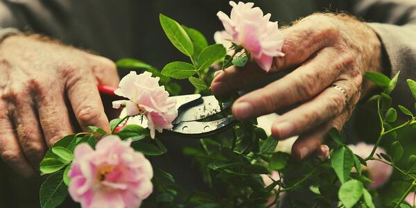 Activities for Elderly Dementia Patients - Gardening - More ideas in the Care For Family Blog
