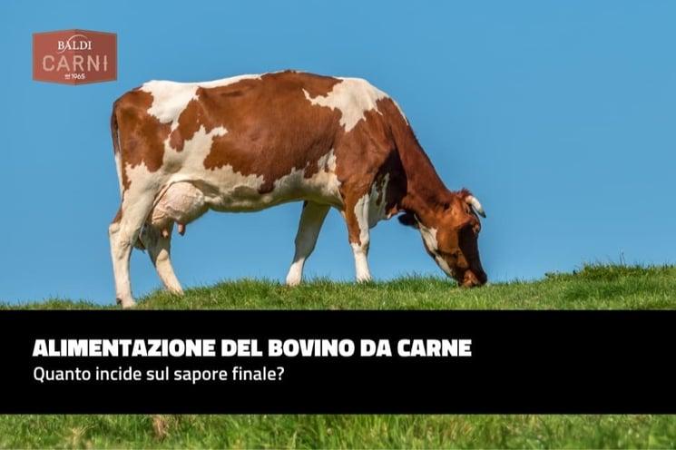 Alimentazione del bovino da carne: quanto incide sul sapore finale?