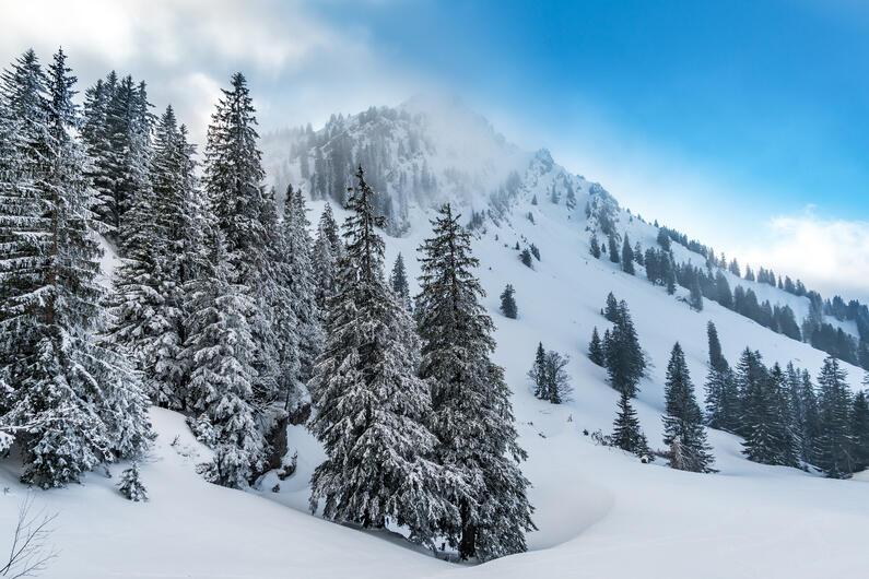 Vacation Rental Market Data Performance for Mountain West - Winter & Summer 2021