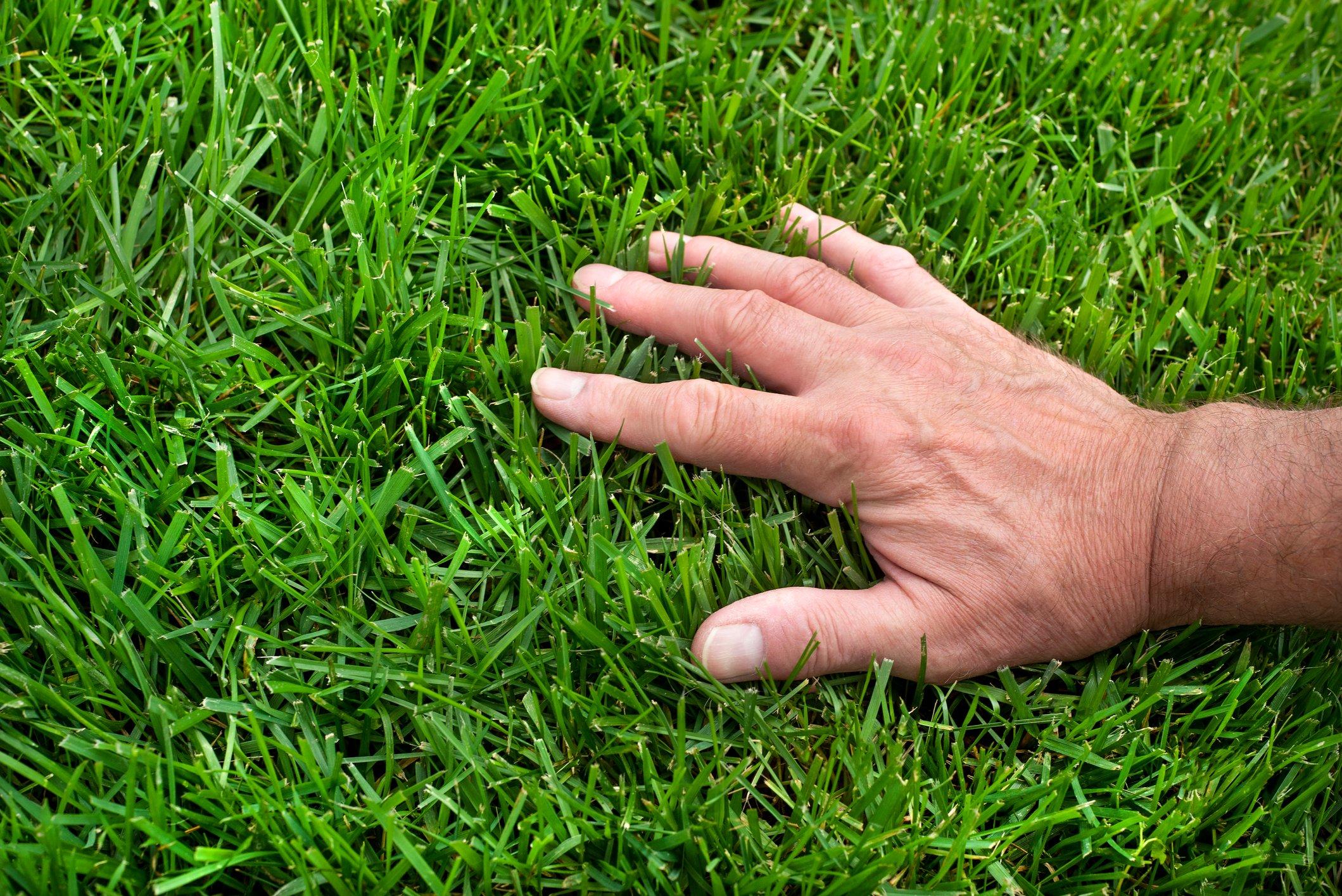 Hand running through blades of grass