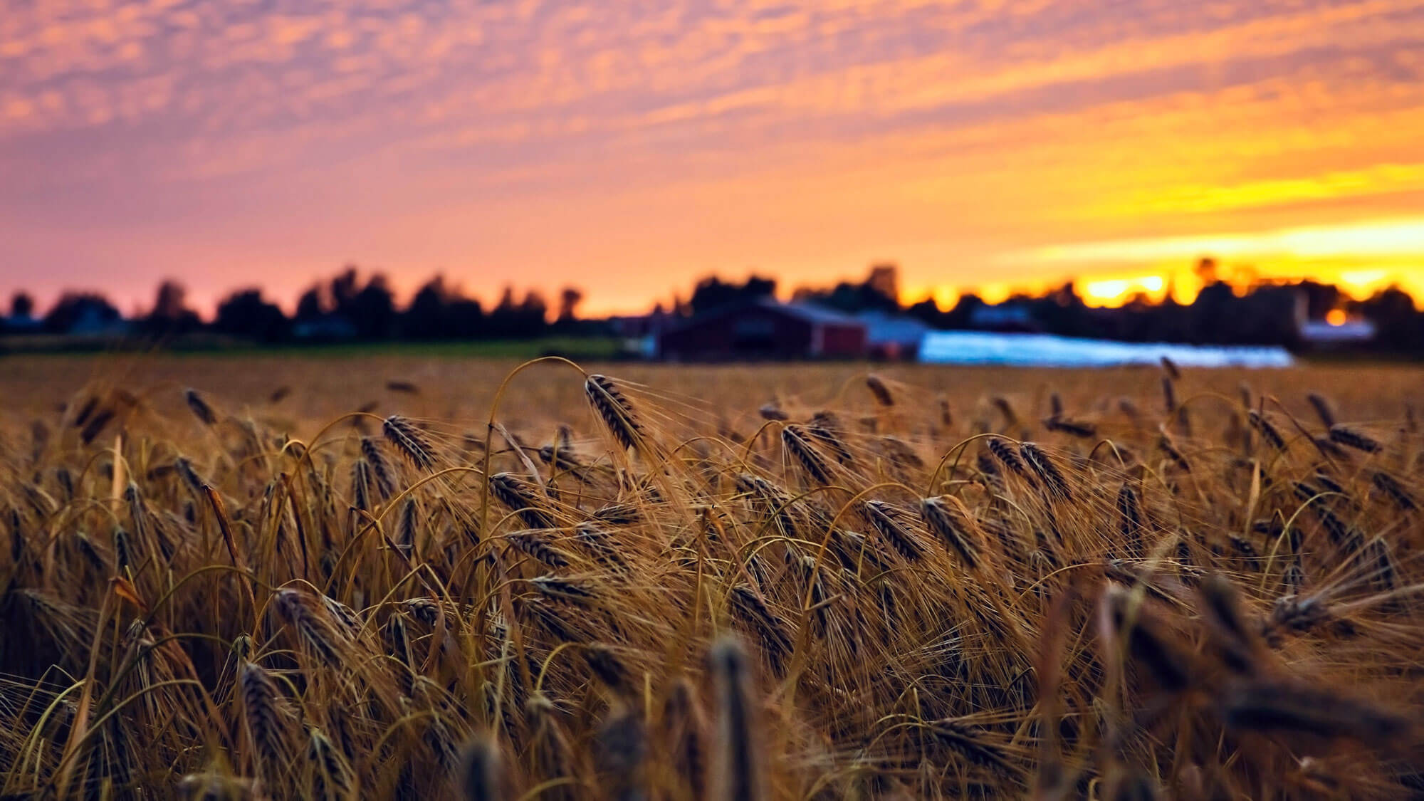 Seasonal crop rotation is key to sustainable farming