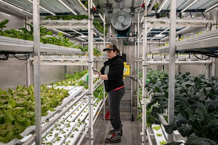 Carly Basler harvests Rocket Greens in a Growcer.
