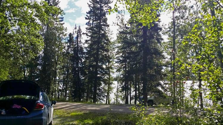 The trees around Paint Lake, Manitoba.