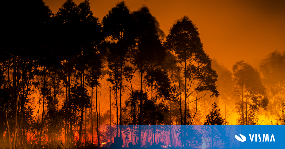 Image of a raging forest fire