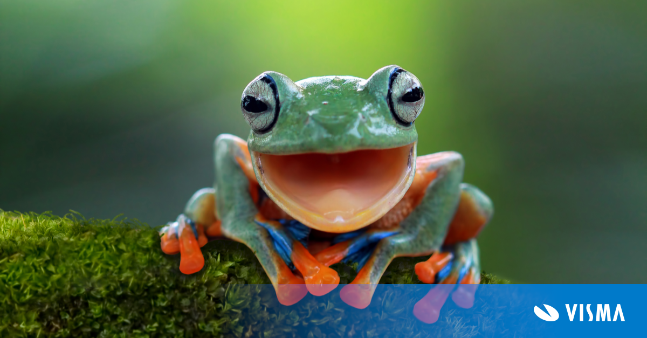 Smiling Tree Frog