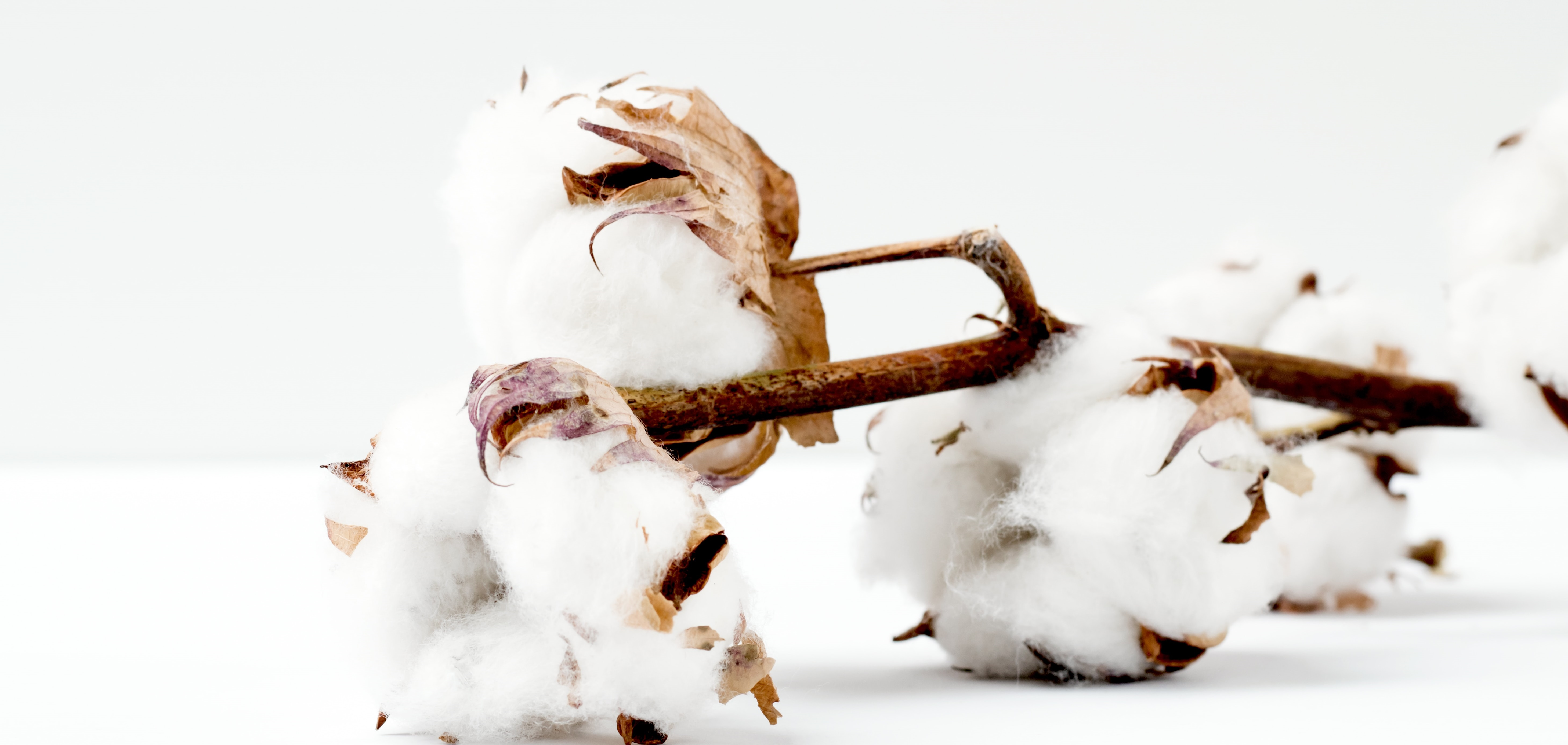 At iRely, we understand cotton. Our commodity management software helps cotton companies improve efficiency, reduce risk, and drive profits.