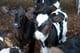 UK Figured Farmers: Oscar van der Spruit - Challoch Farm
