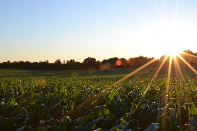 Using Xero and Figured to Help Transform a Kansas Family Farm