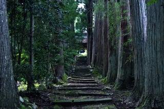【国中地区】静寂の杉木立に建つ清水寺(佐渡市新穂大野)