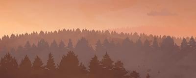 Metsä, kuvituskuva.
