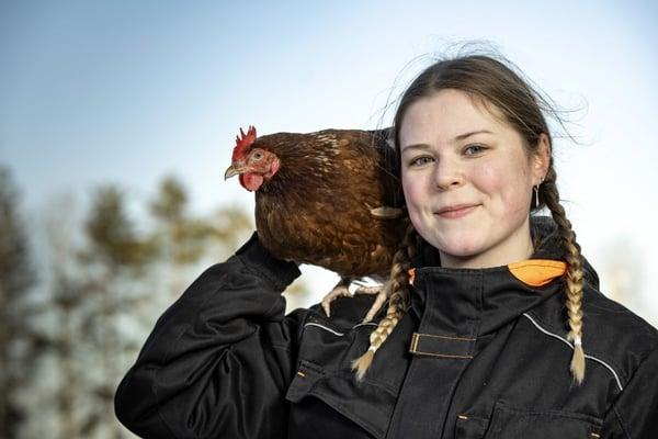 Katariina Isola kertoo Koivunlehdessä kuinka hänen tipuharrastuksestaan kasvoi 2500 kanan palkittu kanala