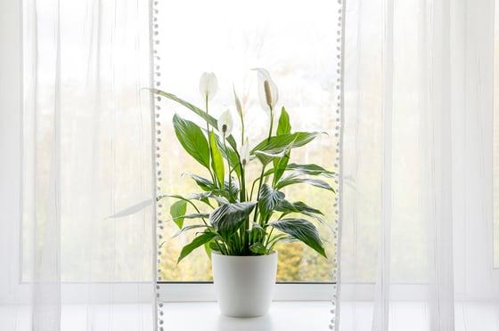 plant healthy indoor air