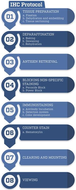 Immunohistochemistry(IHC) Protocol