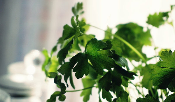 Canva---Shallow-Focus-Photography-of-Green-Leaves