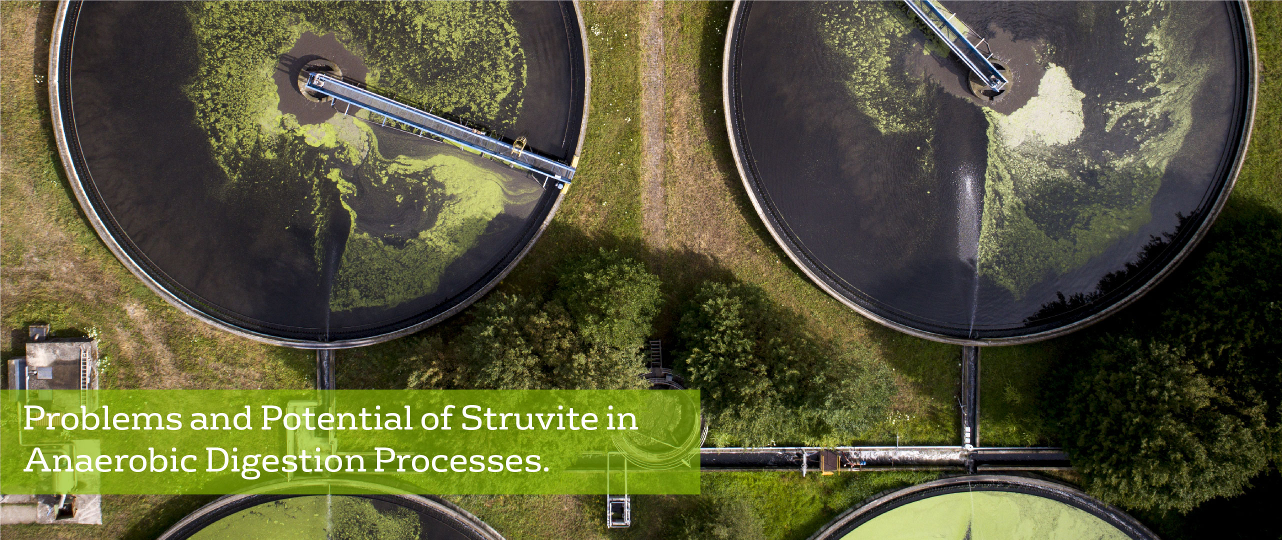 Problems and Potential of Struvite in Anaerobic Digestion Processes