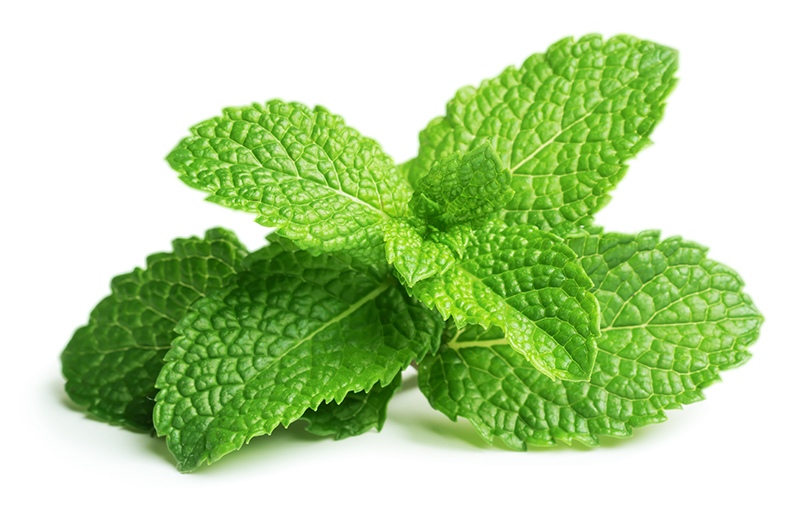 shutterstock_fresh-raw-mint-leaves-isolated-on-white-background