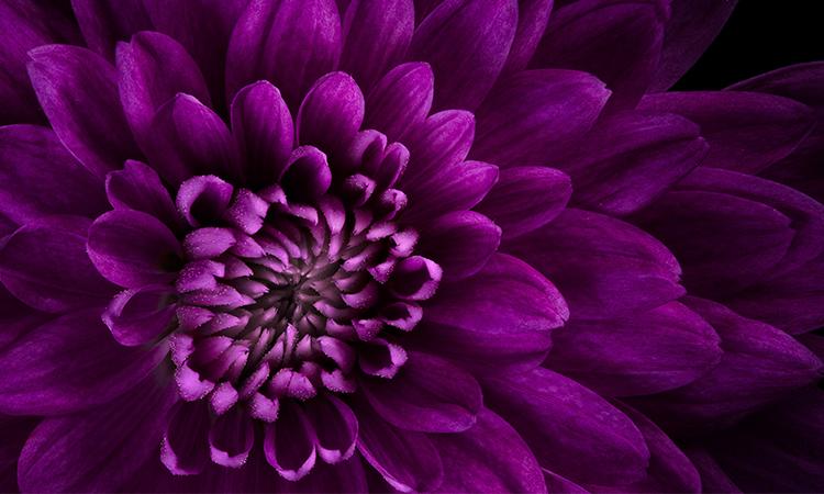 Farbwirkung Violett
