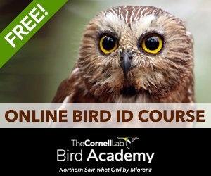 Bird Academy Free Size & Shape